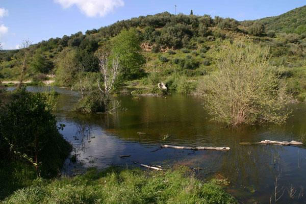 170509_pond-day5