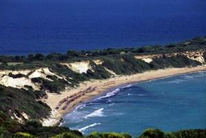 Caratta caratta nesting beach
