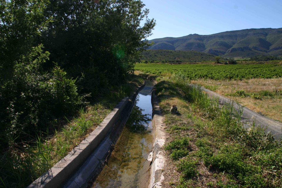 Artificial canal used to water vines, a great habitat for amphibians and water snakes