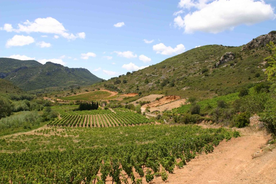Habitat in the Mediterranean where the garrigue meets the vineyards
