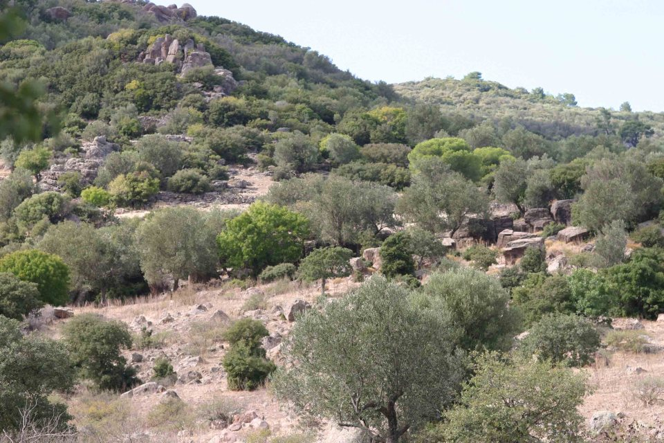 Habitat of Ottoman viper (Montivipera xanthina) and Spur-thighed tortoise (Testudo graeca)