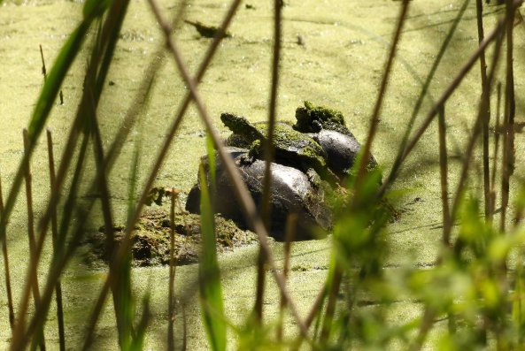 A pile of terrapins