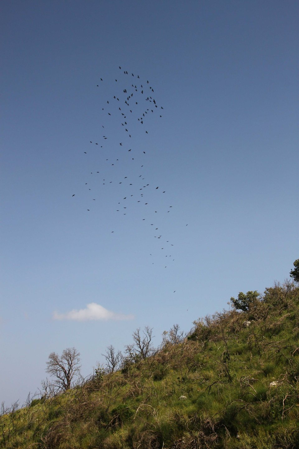 Jackdaws over the fire area