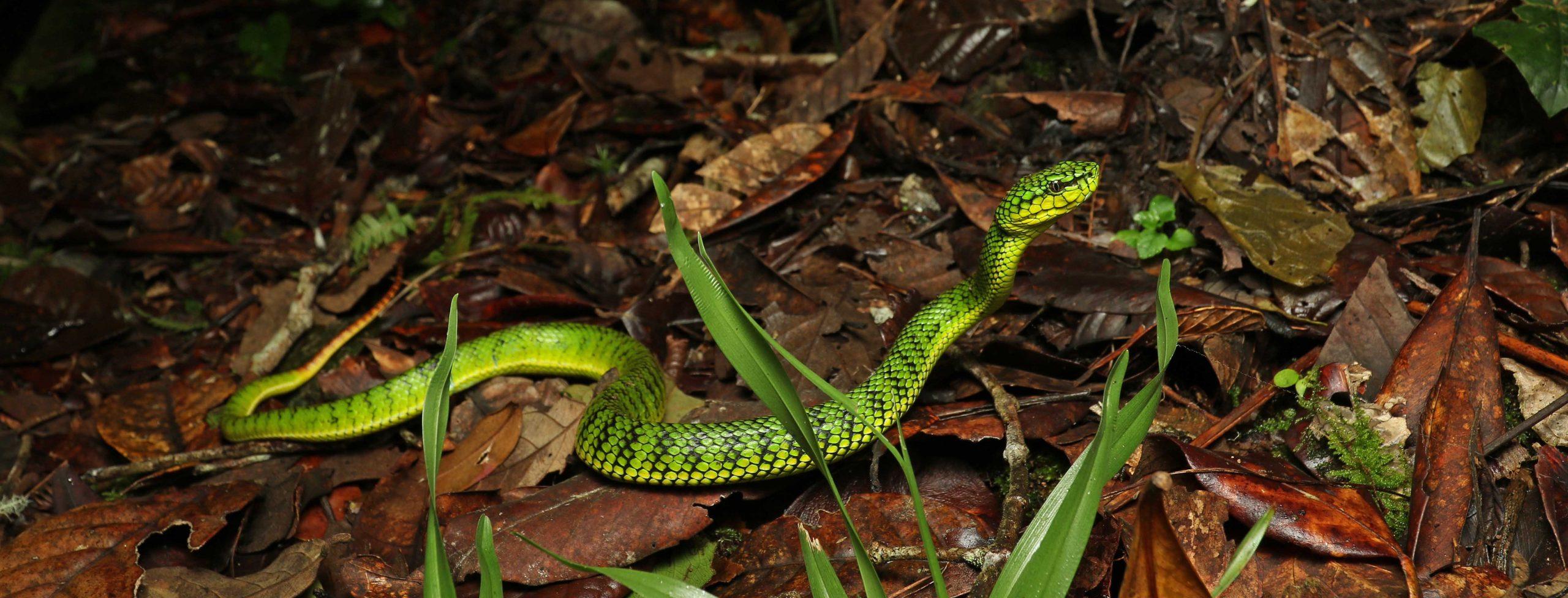 Amphibian & Reptile Travels