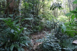 A habitat for a variety of Malay specialist amphibians and reptiles